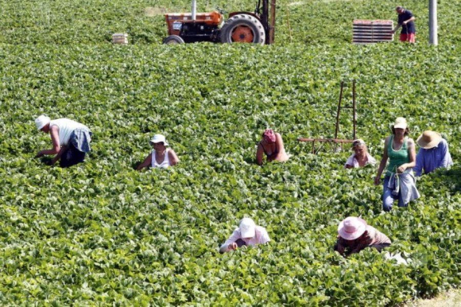 Rinnovato il contratto nazionale di lavoro per gli operai agricoli privati