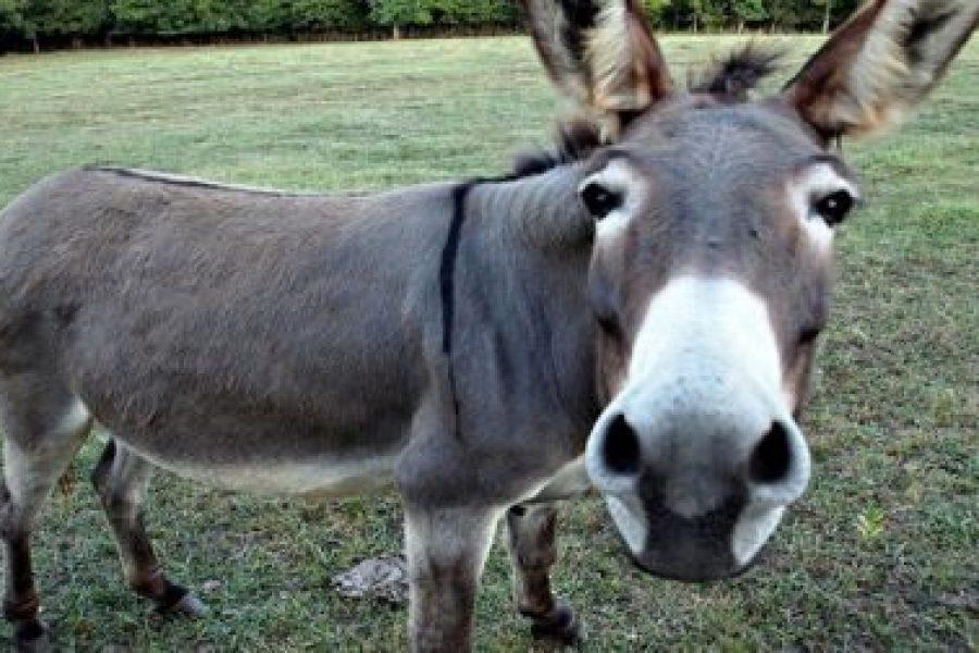 Cgil e Fisac Ferrara: gli asini non sono muli